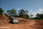 Tree clearing in Panama