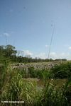Edge of the mangrove forest -- to be cleared shortly