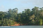Secondary forest along Lake Gatun