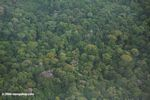 Aerial view of rain forest canopy in Bocas del Toro
