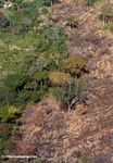 Forest clearing as seen from above