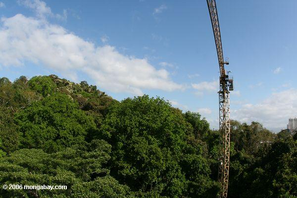The Smithsonian Tropical Research Institute's canopy research crane