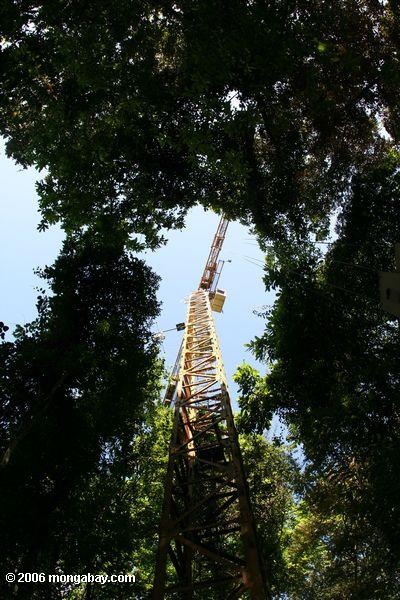 The Smithsonian Tropical Research Institute uses a construction crane to study the tropical forest canopy