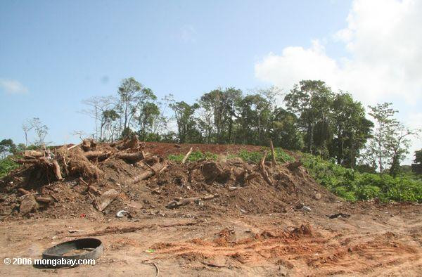 Forest destruction Destroyed