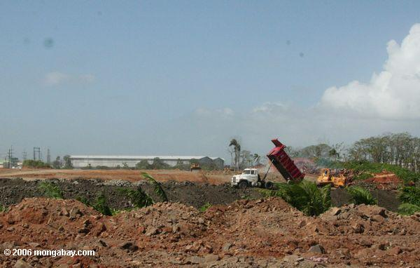 A landfill in Panama that was once mangroves. Photo by: Rhett A. Butler.