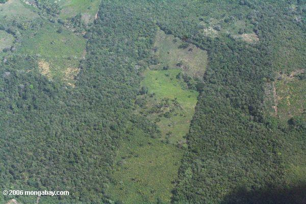 Clearing for cattle pasture in Panama; as seen from an airplane
