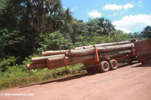 Logs on the back of a truck, Suriname