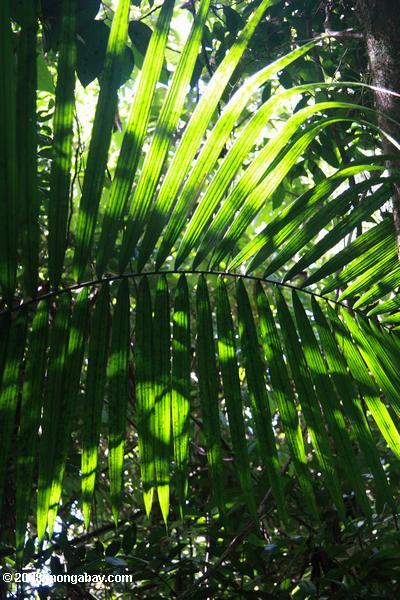 Palm frond lit by sun rays