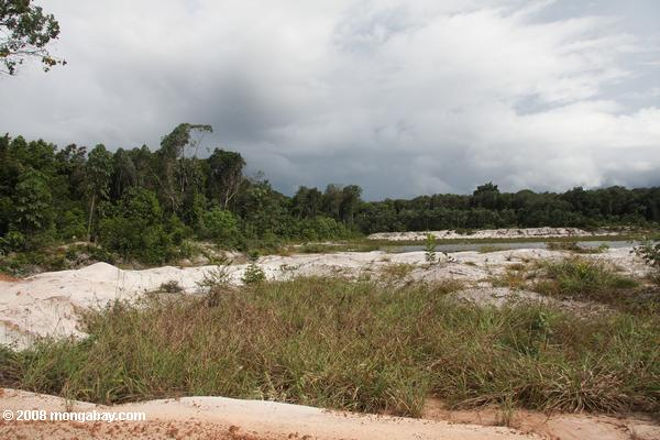 Sand mining in the white sands forest of Suriname
