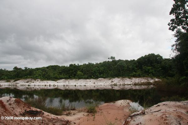 Dredged pool in the white sands rainforest of Suriname