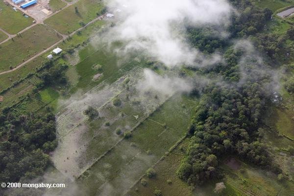 Forest fragment and rice paddies outside of Paramaribo