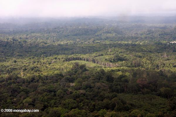 Human-altered forest landscape in the Amazon rainforest