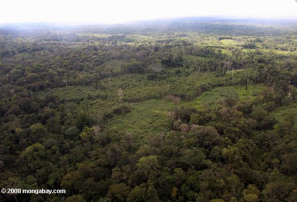 Primary forest and secondary forest among cassava fields in the Amazon. Photo by: Rhett A. Butler.