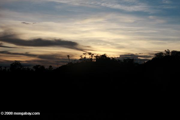 Rainforest sunset [suriname_2383]