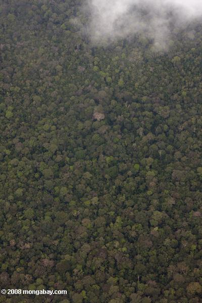 Rainforest canopy seen from an airplane