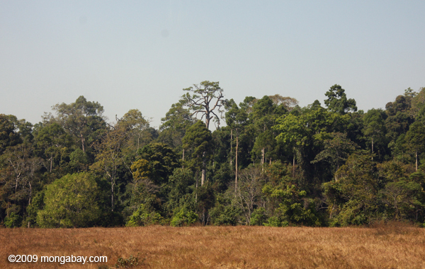 Managed grasslands with rainforest behind it in Khao Yai National Park. Photo by: Rhett A. Butler.