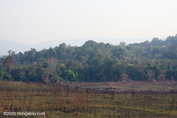 Managed grassland and forest in Khao Yai