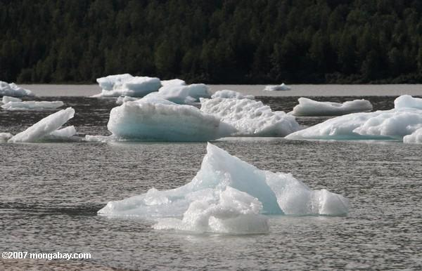 Icebergs in Lake Mendenhall
