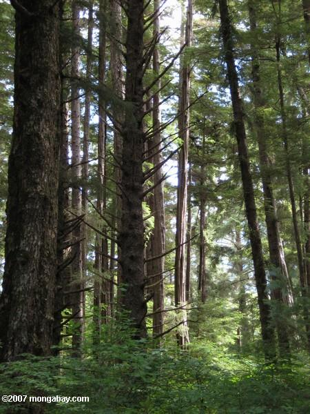 Forest of Sitka National Historical Park