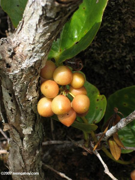 Peach-colored fruit